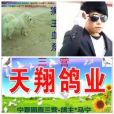 三营信鸽协会_固原市三营天翔鸽业中国信鸽信息网wwwchi