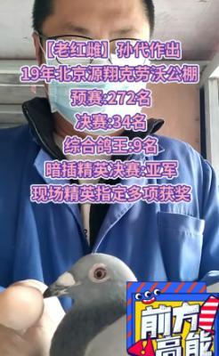 【老红雌】孙代作出-鸽王九名