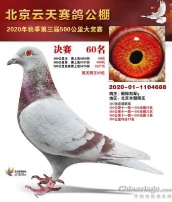 北京朝阳鸽舍