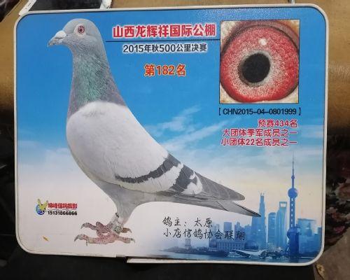 创世纪《贵州白鸽联盟》