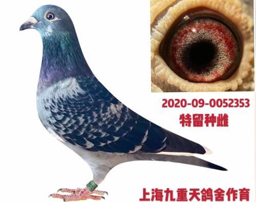 上海九重天鸽舍