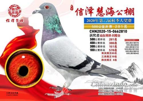 藏��鸽语